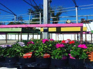 Our-Garden-Centre-gallinagh-nursery