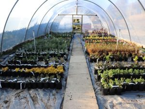 View-of-our-nursery-Growing-Tunnels